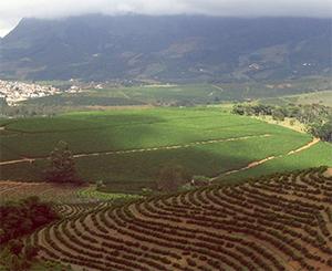 Brazilië koffieplantage